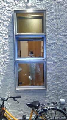 soku_35098.jpg :: 動物 哺乳類 猫 ネコ みゃーちゃん 自転車
