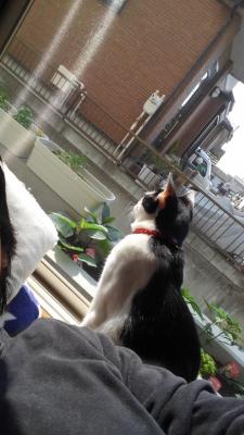 soku_35099.jpg :: 動物 哺乳類 猫 ネコ みゃーちゃん なすび苗