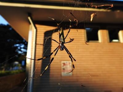 soku_35178.jpg :: 動物 虫 昆虫 蜘蛛 クモ