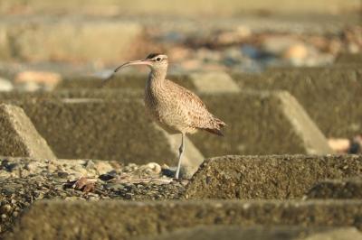 soku_35195.jpg :: 動物 鳥 野鳥 自然の鳥 未記入鳥