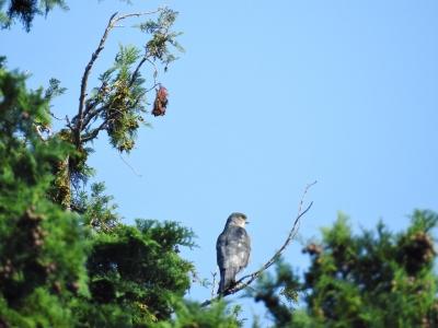 soku_35205.jpg :: 小鳥 ツミ