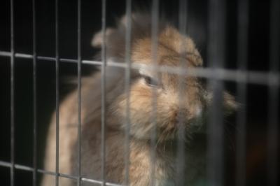soku_35243.jpg :: 熊本市動植物園 動物 哺乳類 鼠 ネズミ カピバラ