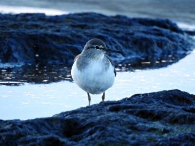 soku_35353.jpg :: 動物 鳥 野鳥 自然の鳥