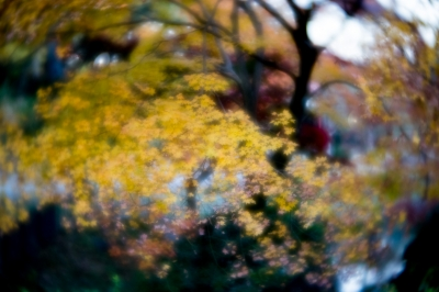 soku_35364.jpg :: K.1 LENSBABY Velvet56mm 紅葉 LR現像 ぐるぐるボケ