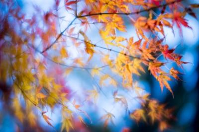 soku_35388.jpg :: K.1 LENSBABY Velvet56mm f1.6 開放 紅葉 LR現像
