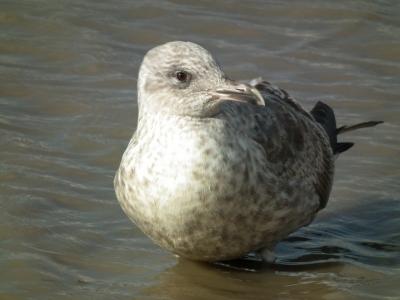 soku_35418.jpg :: 動物 鳥 野鳥 自然の鳥 未記入鳥