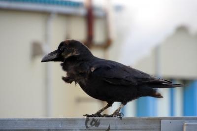 soku_35435.jpg :: 動物 鳥 野鳥 自然の鳥 未記入鳥
