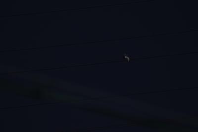 soku_35441.jpg :: 乗り物 交通 航空機 飛行機 軍用機