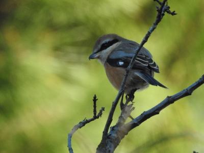 soku_35481.jpg :: 動物 鳥 野鳥 自然の鳥 未記入鳥
