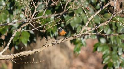 soku_35511.jpg :: 動物 鳥 野鳥 自然の鳥 未記入鳥