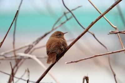 soku_35513.jpg :: 動物 鳥 野鳥 自然の鳥 未記入鳥