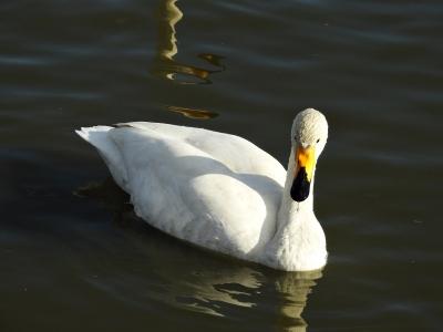 soku_35549.jpg :: 鳥