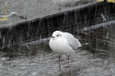 soku_35557.jpg :: 動物 鳥 野鳥 自然の鳥 未記入鳥