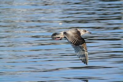 soku_35570.jpg :: 動物 鳥 野鳥 自然の鳥 未記入鳥