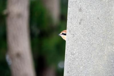 soku_35571.jpg :: 動物 鳥 野鳥 自然の鳥 未記入鳥