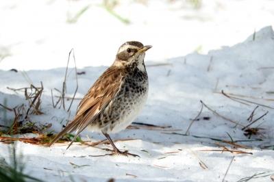 soku_35573.jpg :: 動物 鳥 野鳥 自然の鳥 未記入鳥