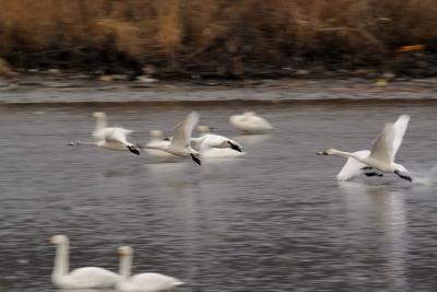 soku_35585.jpg :: 動物 鳥 野鳥 自然の鳥 未記入鳥