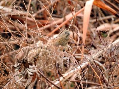 soku_35587.jpg :: 動物 鳥 野鳥 自然の鳥 未記入鳥