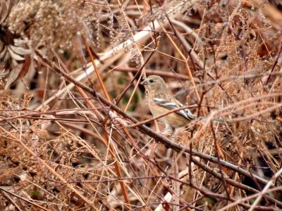soku_35588.jpg :: 動物 鳥 野鳥 自然の鳥 未記入鳥