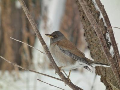 soku_35603.jpg :: 動物 鳥 野鳥 自然の鳥 未記入鳥