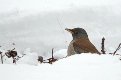 soku_35604.jpg :: 動物 鳥 野鳥 自然の鳥 未記入鳥