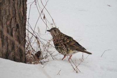soku_35605.jpg :: 動物 鳥 野鳥 自然の鳥 未記入鳥