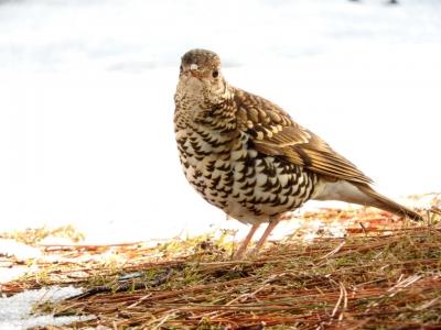 soku_35611.jpg :: 動物 鳥 野鳥 自然の鳥 未記入鳥
