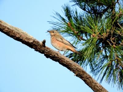 soku_35612.jpg :: 動物 鳥 野鳥 自然の鳥 未記入鳥