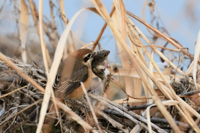 soku_35625.jpg :: 動物 鳥 野鳥 自然の鳥 未記入鳥
