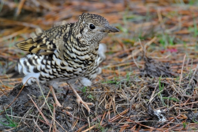 soku_35627.jpg :: 動物 鳥 野鳥 自然の鳥 未記入鳥