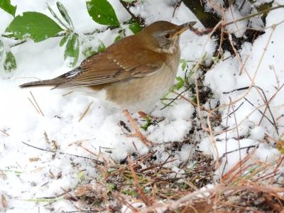 soku_35629.jpg :: 動物 鳥 野鳥 自然の鳥 未記入鳥