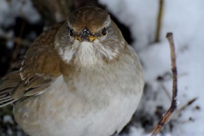 soku_35630.jpg :: 動物 鳥 野鳥 自然の鳥 未記入鳥