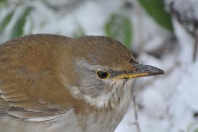 soku_35631.jpg :: 動物 鳥 野鳥 自然の鳥 未記入鳥