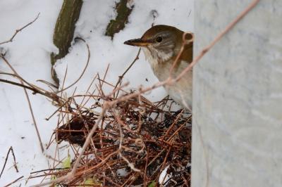 soku_35632.jpg :: 動物 鳥 野鳥 自然の鳥 未記入鳥