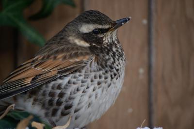 soku_35647.jpg :: 動物 鳥 野鳥 自然の鳥 未記入鳥