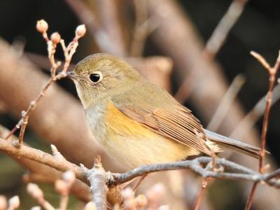 soku_35648.jpg :: 動物 鳥 野鳥 自然の鳥 未記入鳥