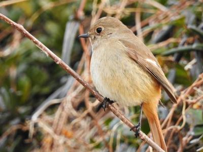 soku_35649.jpg :: 動物 鳥 野鳥 自然の鳥 未記入鳥