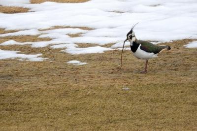 soku_35658.jpg :: 動物 鳥 野鳥 自然の鳥 未記入鳥