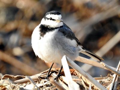 soku_35665.jpg :: 動物 鳥 野鳥 自然の鳥 未記入鳥