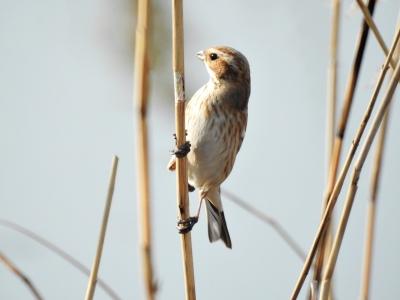 soku_35667.jpg :: 動物 鳥 野鳥 自然の鳥 未記入鳥