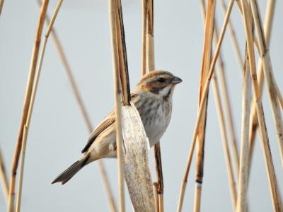 soku_35668.jpg :: 動物 鳥 野鳥 自然の鳥 未記入鳥