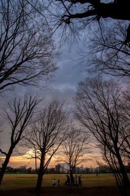 soku_35764.jpg :: 風景 自然 森林 雑木林
