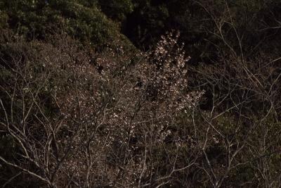 soku_35765.jpg :: 風景 自然 森林 雑木林