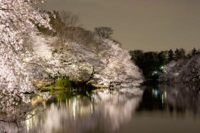soku_35770.jpg :: 井の頭公園 植物 花 桜 サクラ 夜桜 風景 自然 水面 水鏡