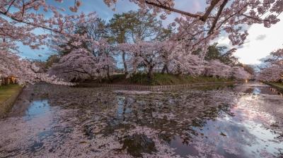 soku_35771.jpg :: 植物 花 桜 サクラ 風景 自然 水面 水鏡