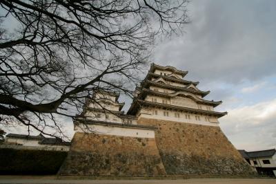 soku_35775.jpg :: 姫路城 桜 咲いてない 植物 花 桜 サクラ 枝