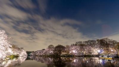 soku_35776.jpg :: 井の頭公園 植物 花 桜 サクラ 夜桜 風景 自然 水面 水鏡