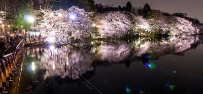 soku_35778.jpg :: 井の頭公園 夜桜 ゴースト