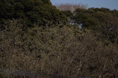soku_35799.jpg :: 風景 自然 森林 雑木林