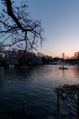 soku_35819.jpg :: 植物 花 桜 サクラ 風景 自然 池